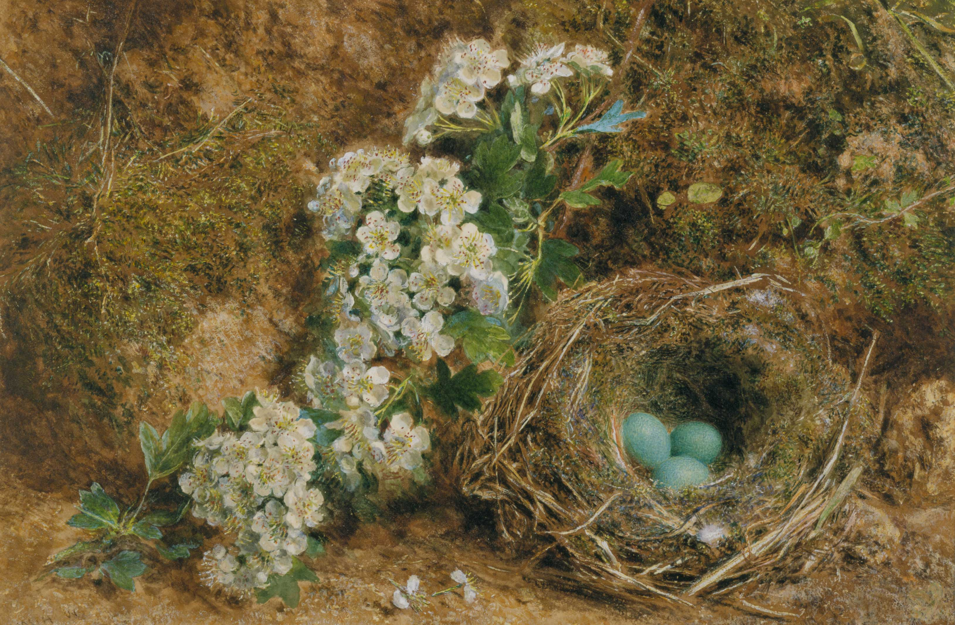 May Blossom and Hedge-Sparrow's Nest