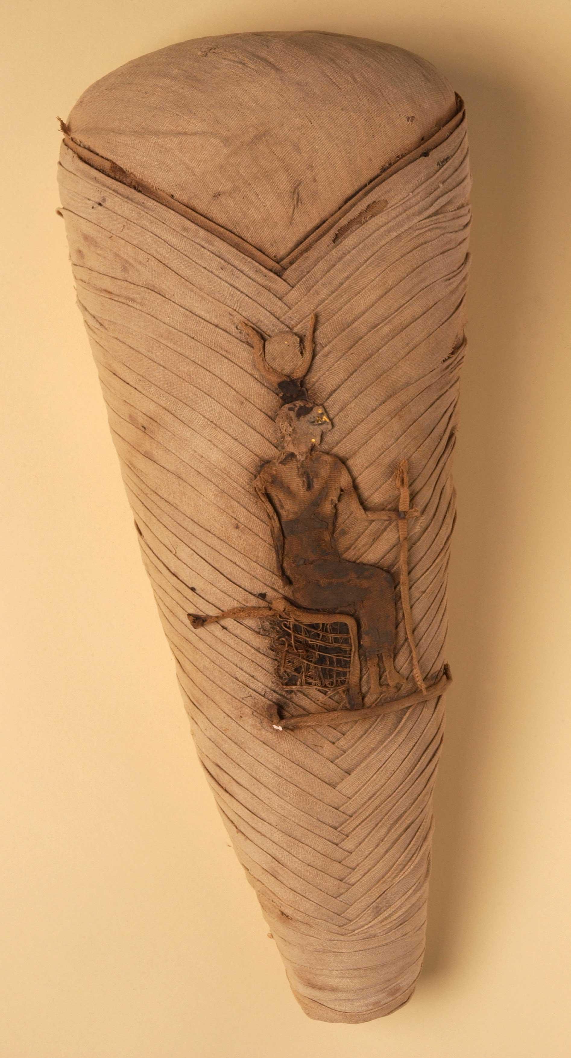 Ibis mummy
