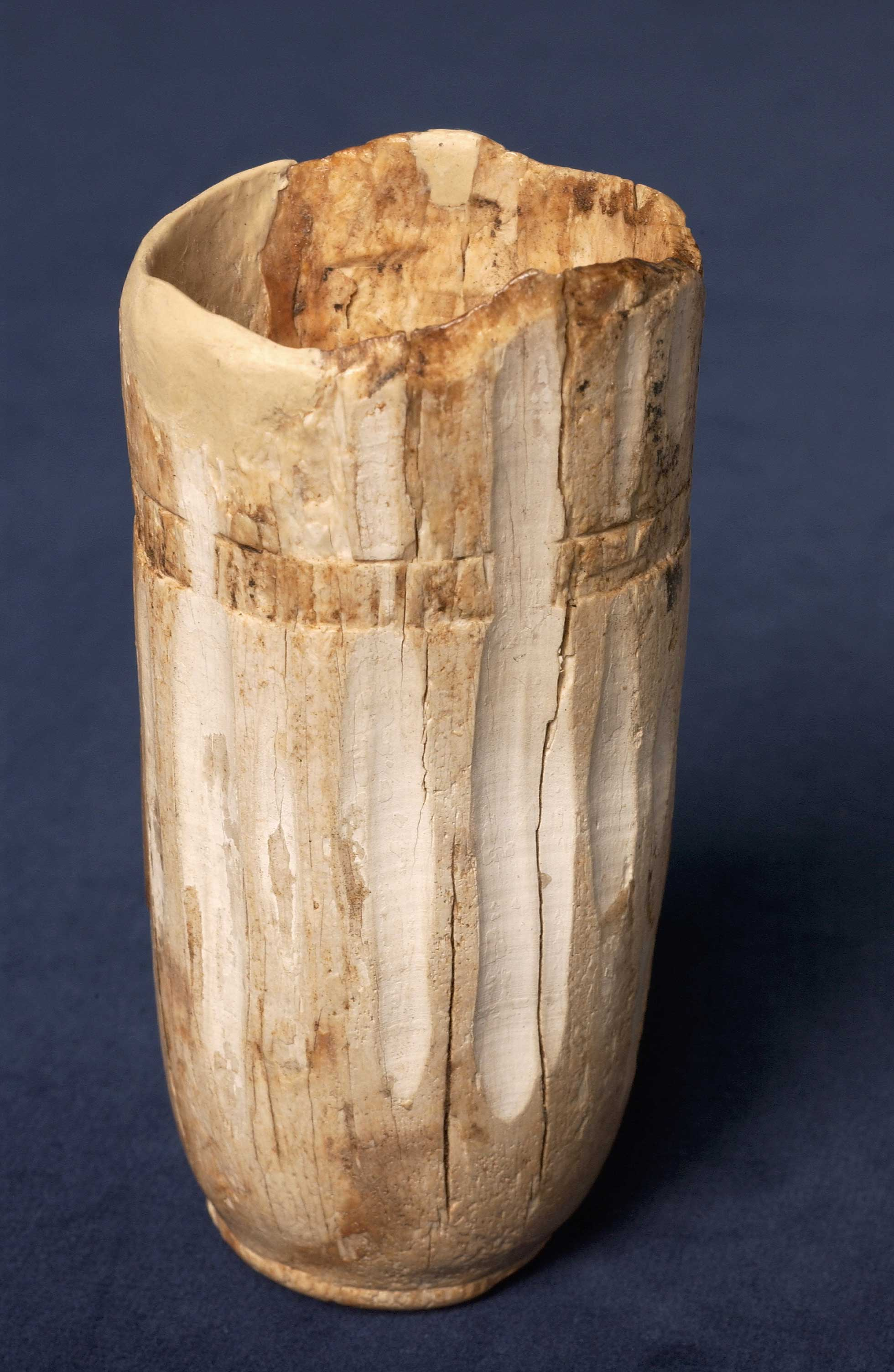 Tusk cup
